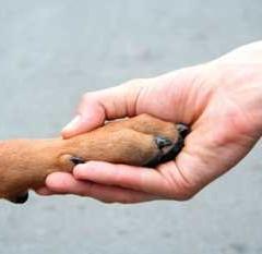 Un perro para cada hogar